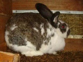Когда кролики начинают есть самостоятельно?